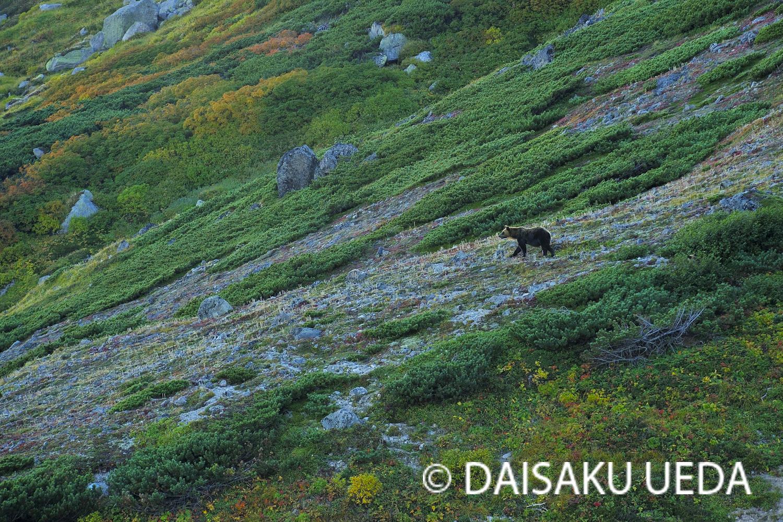 (C) DAISAKU UEDA Wildlife Photograph 0
