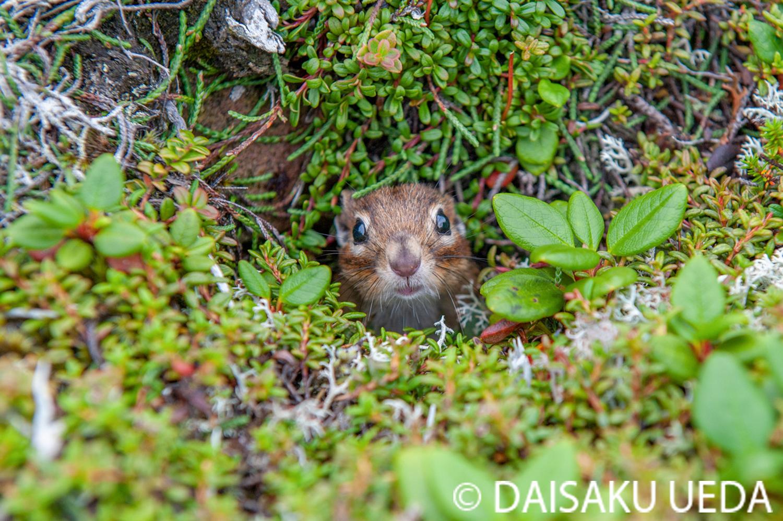 (C) DAISAKU UEDA Wildlife Photograph 3