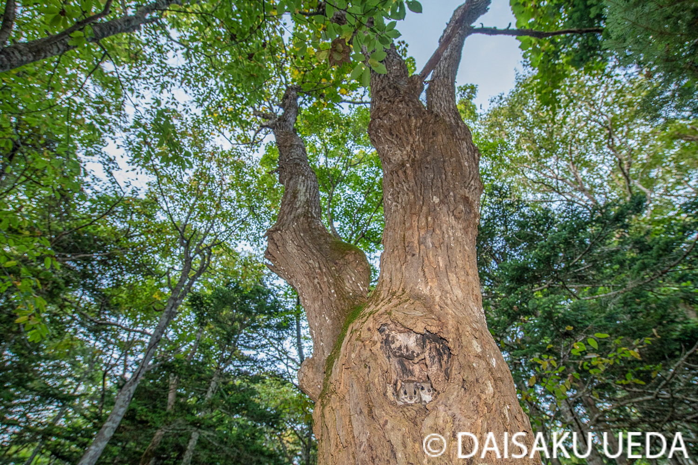 (C) DAISAKU UEDA Wildlife Photograph 2