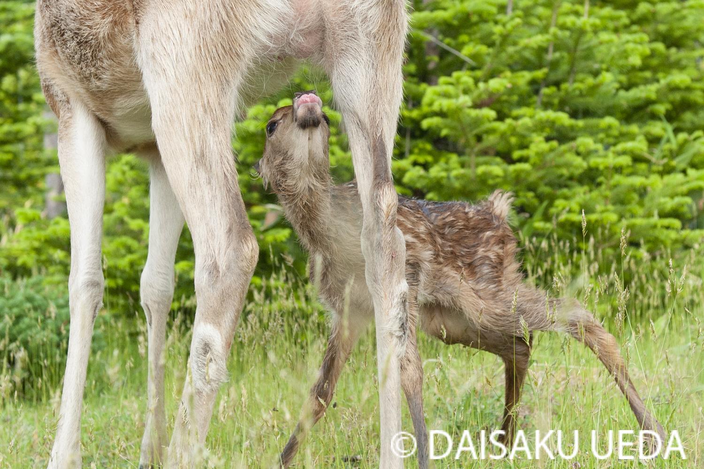 (C) DAISAKU UEDA Wildlife Photograph 6