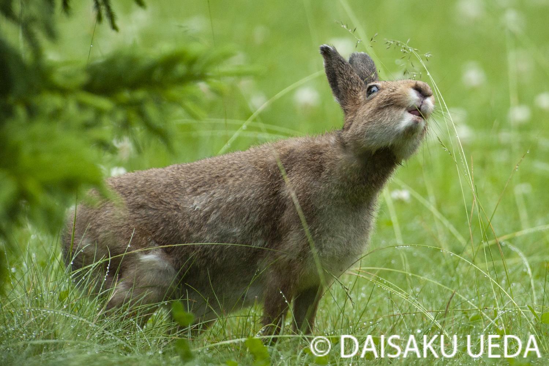 (C) DAISAKU UEDA Wildlife Photograph 1